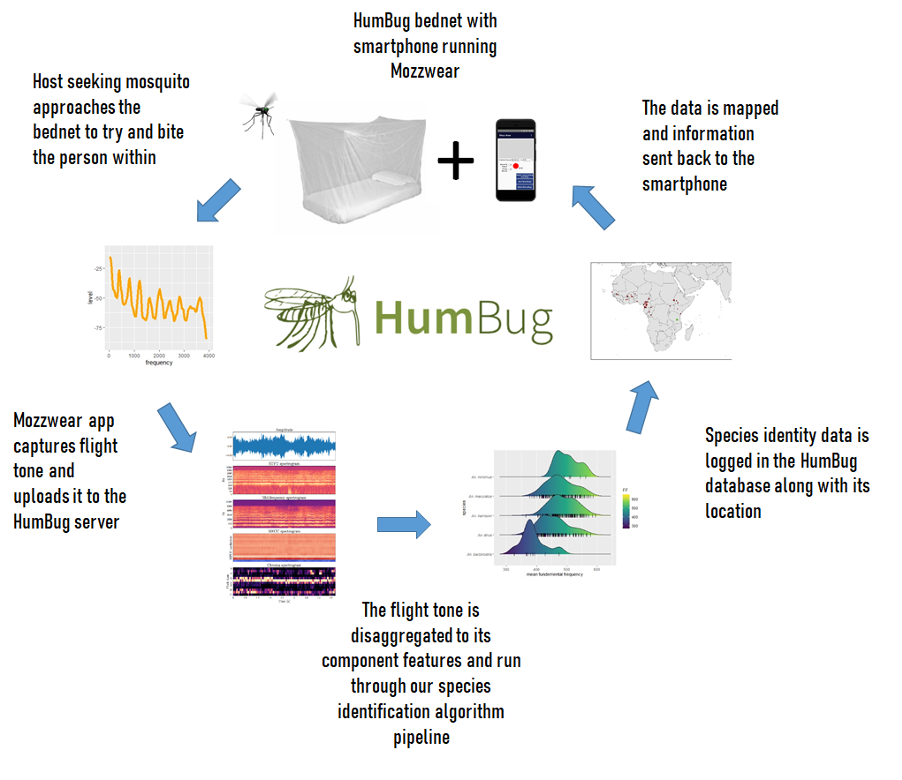 humbug workflow diagram
